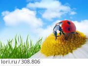 Купить «Божья коровка на цветке», фото № 308806, снято 26 апреля 2019 г. (c) Анатолий Типляшин / Фотобанк Лори