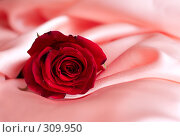 Купить «Роза. Rose», фото № 309950, снято 30 марта 2007 г. (c) Алена Роот / Фотобанк Лори
