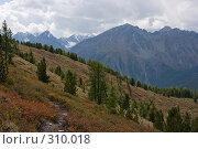 Горный склон, фото № 310018, снято 26 сентября 2017 г. (c) Андрей Пашкевич / Фотобанк Лори