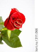 Купить «Любовь на розе», фото № 311066, снято 23 марта 2008 г. (c) Владимир Сурков / Фотобанк Лори