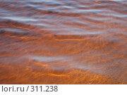 Купить «Песчаное дно озера Сямозеро. Карелия», фото № 311238, снято 24 мая 2008 г. (c) Сергей Костин / Фотобанк Лори