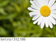 Ромашка. Стоковое фото, фотограф Константин Куприянов / Фотобанк Лори