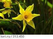 Купить «Желтая звезда», фото № 313450, снято 2 мая 2008 г. (c) Анатолий Теребенин / Фотобанк Лори