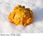 Купить «Декоративная оранжевая тыква на снегу», фото № 316322, снято 14 ноября 2007 г. (c) Наталья Санченко / Фотобанк Лори