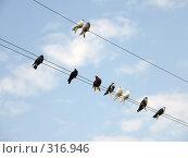 Голуби на проводах. Стоковое фото, фотограф Фиронов Максим / Фотобанк Лори