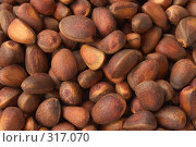 Купить «Кедровые орехи крупным планом», фото № 317070, снято 22 мая 2005 г. (c) Галина Михалишина / Фотобанк Лори