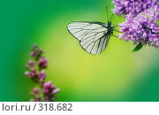 Купить «Бабочка», фото № 318682, снято 18 июня 2006 г. (c) Алена Роот / Фотобанк Лори