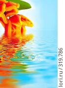 Тюльпаны на фоне неба и воды. Стоковое фото, фотограф Майя Крученкова / Фотобанк Лори