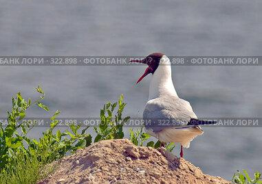 Купить «Птичка чайка», фото № 322898, снято 14 июня 2008 г. (c) Кондорский Дмитрий / Фотобанк Лори