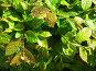 Капли на листьях, фото № 325338, снято 30 апреля 2008 г. (c) ИВА Афонская / Фотобанк Лори