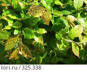 Купить «Капли на листьях», фото № 325338, снято 30 апреля 2008 г. (c) ИВА Афонская / Фотобанк Лори