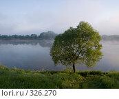 Купить «Ива на берегу реки. Рассвет. Июнь», эксклюзивное фото № 326270, снято 14 июня 2008 г. (c) Алина Голышева / Фотобанк Лори