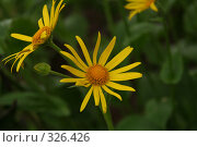 Купить «Солнышко», фото № 326426, снято 25 мая 2008 г. (c) Мария Малиновская / Фотобанк Лори