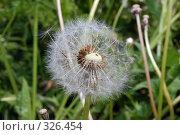 Купить «Улетающее семечко одуванчика на фоне травы», фото № 326454, снято 12 июня 2008 г. (c) Иван Авдеев / Фотобанк Лори