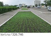 Зелень на газонах города Краснокаменска, фото № 326746, снято 16 июня 2008 г. (c) Геннадий Соловьев / Фотобанк Лори