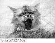 Купить «Мяукающий кот», фото № 327602, снято 17 июня 2008 г. (c) Морозова Татьяна / Фотобанк Лори