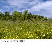 Купить «Летний солнечный день на цветущей поляне», фото № 327882, снято 10 июня 2008 г. (c) Олег Рубик / Фотобанк Лори
