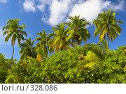 Купить «Тропический лес на островах в Индийском океане», фото № 328086, снято 19 августа 2018 г. (c) М / Фотобанк Лори