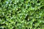 Фон вертикальный. Листья, эксклюзивное фото № 328866, снято 10 мая 2008 г. (c) Татьяна Лата / Фотобанк Лори