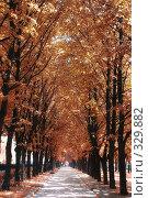 Купить «Другая осень», фото № 329882, снято 12 июня 2008 г. (c) Недорез Александр / Фотобанк Лори