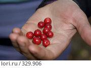 Купить «Ягода брусника», фото № 329906, снято 6 сентября 2007 г. (c) Андрюхина Анастасия / Фотобанк Лори