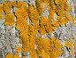 Мох на текстуре тополя, фото № 329994, снято 21 января 2017 г. (c) Александр Fanfo / Фотобанк Лори