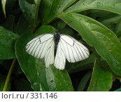 Бабочка. Стоковое фото, фотограф Дружинин Александр / Фотобанк Лори