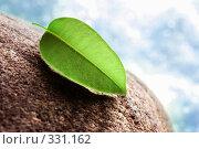 Экологически чистый листок на камне, фото № 331162, снято 18 апреля 2008 г. (c) Евгений Захаров / Фотобанк Лори
