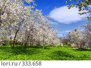 Купить «Вишневый сад», фото № 333658, снято 7 мая 2008 г. (c) Евгений Захаров / Фотобанк Лори