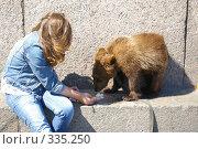 Купить «Медвежонок на работе», фото № 335250, снято 13 июня 2008 г. (c) Oksana Mahrova / Фотобанк Лори