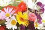 Цветы, фото № 335938, снято 19 июня 2008 г. (c) Угоренков Александр / Фотобанк Лори