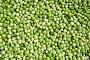 Зеленый горошек, фото № 336806, снято 21 июня 2008 г. (c) Елена Гордеева / Фотобанк Лори