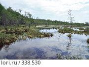 Купить «Непроходимое болото в сибирской тайге», фото № 338530, снято 19 июня 2008 г. (c) Круглов Олег / Фотобанк Лори