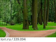 Купить «Развилка парковой дорожки покрытой щебнем, на переднем плане деревья в густой траве», фото № 339094, снято 29 июня 2008 г. (c) Владимир Казарин / Фотобанк Лори