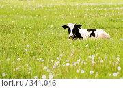 Теленок на цветущем лугу. Стоковое фото, фотограф Ирина Игумнова / Фотобанк Лори