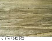 Скол дерева. Стоковое фото, фотограф Елена Селезнева / Фотобанк Лори