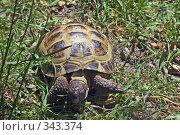 Купить «Черепаха», фото № 343374, снято 7 июня 2008 г. (c) Павел Савин / Фотобанк Лори