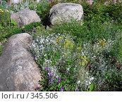Купить «Ландшафтный дизайн в Петровском парке», эксклюзивное фото № 345506, снято 25 июня 2008 г. (c) lana1501 / Фотобанк Лори