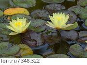 Купить «Кувшинка или водяная лилия.Дендрарий города Сочи.», фото № 348322, снято 3 июля 2008 г. (c) Федор Королевский / Фотобанк Лори