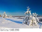 Купить «Сосны под снегом», фото № 349990, снято 2 декабря 2007 г. (c) podfoto / Фотобанк Лори