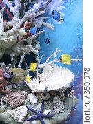 Купить «Муляж кораллового рифа с рыбками», фото № 350978, снято 19 января 2019 г. (c) Losevsky Pavel / Фотобанк Лори
