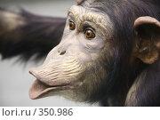 Купить «Шимпанзе», фото № 350986, снято 19 октября 2018 г. (c) Losevsky Pavel / Фотобанк Лори