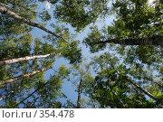 Купить «Белые березы», фото № 354478, снято 14 июня 2008 г. (c) Елена Бринюк / Фотобанк Лори