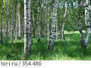 Купить «Белые березы», фото № 354486, снято 14 июня 2008 г. (c) Елена Бринюк / Фотобанк Лори