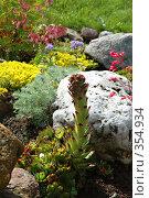 Купить «Молодило (каменная роза) в оформлении альпийской горки, рокария (sempervivum)», фото № 354934, снято 12 марта 2005 г. (c) Ольга Дроздова / Фотобанк Лори