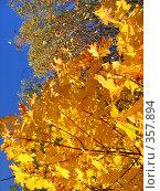 Купить «Контраст», фото № 357894, снято 30 сентября 2007 г. (c) анна кузнецова / Фотобанк Лори