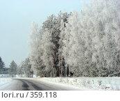 Купить «Дорога в лесу, морозный зимний день, Владимирская область», эксклюзивное фото № 359118, снято 8 января 2008 г. (c) lana1501 / Фотобанк Лори