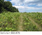 Купить «Дорога», фото № 360870, снято 11 июля 2008 г. (c) Влад / Фотобанк Лори