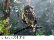 Купить «Сова в сказочном лесу», фото № 361318, снято 7 апреля 2005 г. (c) Сергей Лаврентьев / Фотобанк Лори