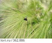Купить «Муха», фото № 362886, снято 20 июля 2008 г. (c) Марат Кабиров / Фотобанк Лори